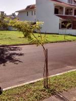 Viveiro de Canoas volta a realizar doação de mudas deárvores