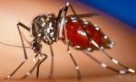 Aedes Aegypti e os riscos à saúde e aos JogosOlímpicos