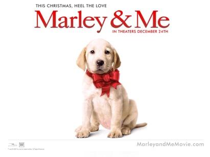4231839-marley--me-dog-normal