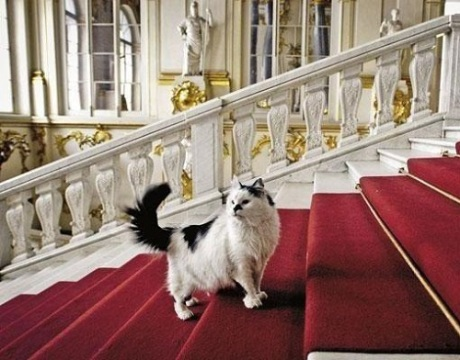 Cats-of-State-Hermitage-St.-Petersburg-2