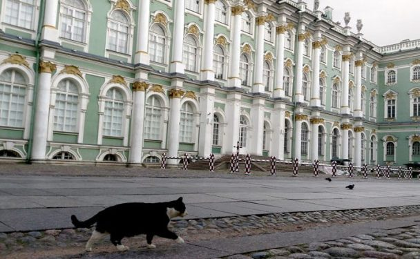 hermitage-cats-web-720x445